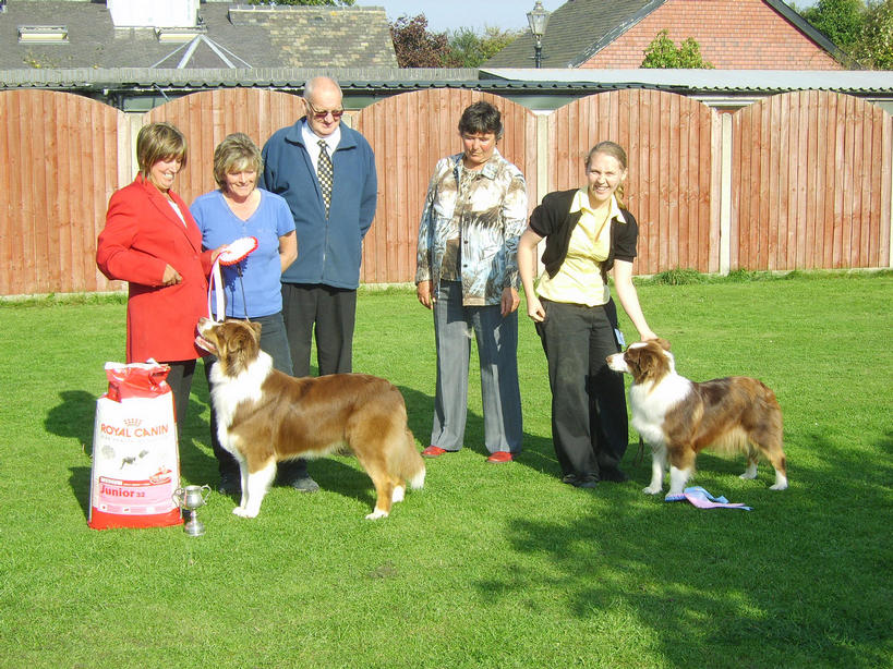 ROBBIE WINNING BEST PUPPY IN SHOW AT ASCUK OPEN SHOW HIS SISTER FLAME WON RESERVE BEST PUPPY IN SHOW