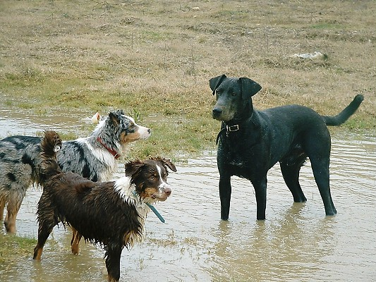 ZENIE WITH HER KENNEL MATES HAVING A PADDLE IN A POOL OF WATER