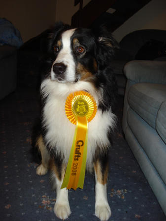 Echo with his Crufts Rosette