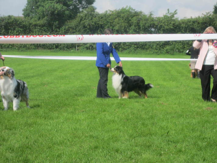 Running Bear Blk Tri Dog at ASCUK OPEN SHOW 21st July 2012