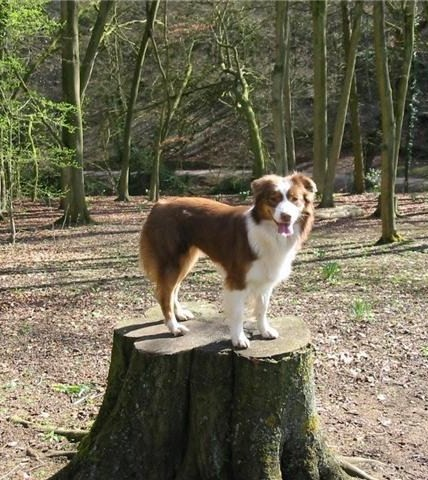 PEP STANDING ON A TREE STUMP LOOKING FOR HER DAD