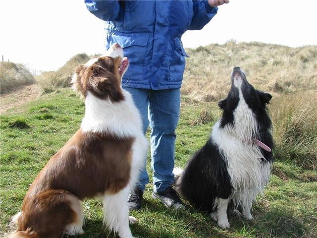 PEP WITH BORDER COLLIE NELL OWNED BY BRENDA TURNER