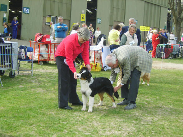 judge going over Jacob at Welks Ch Show 24th April 10