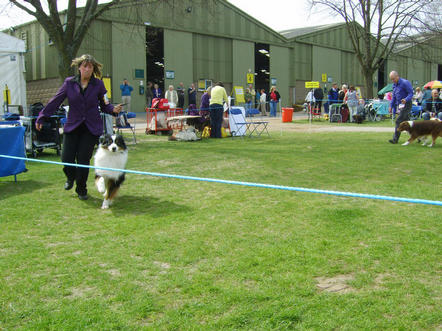 Bear moving round the ring Welks 2010