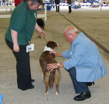 ZENNIE BEING JUDGED AT CITY OF BIRMINGHAM CHAMP SHOW 5 SEPT 09 JUDGE GEOFF DUFFIELD
