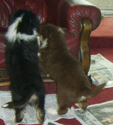 OLI & JACOB CLIMBING ON CHAIR