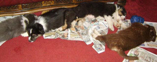 MISTY ALFIE JACOB & OLI  SLEEPING