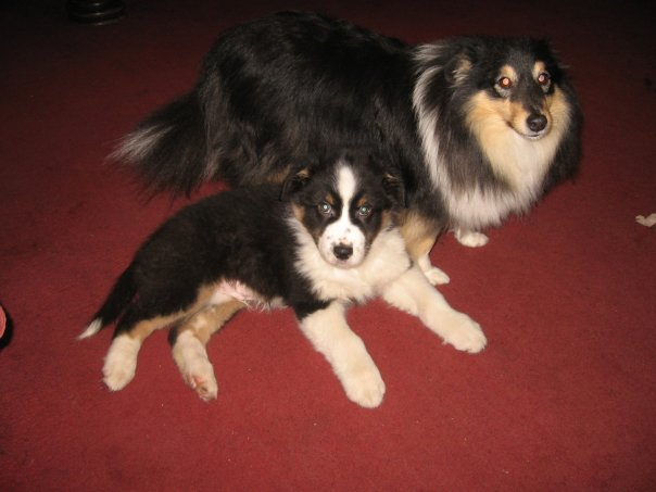 JACOB LAYING NEXT TO DUSTY THE SHETLAND SHEEPDOG