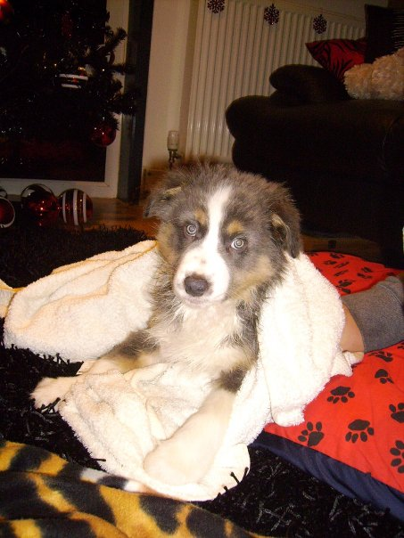 MISTY DRYING OFF AFTER HER BATH