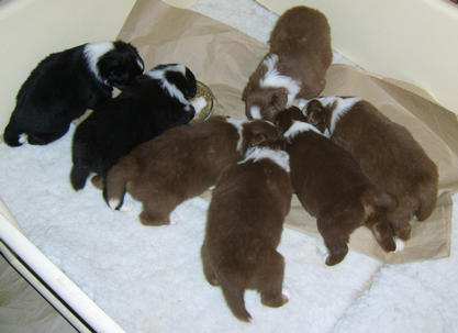 Puppies at 3 weeks feeding time