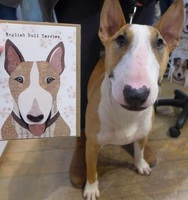 Elsa the English Bull Terrier standing next to the greeting card she modelled for