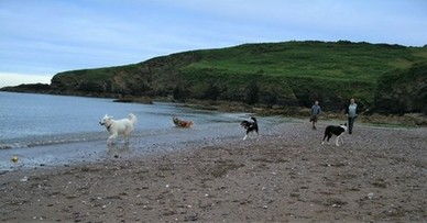 Dogs and their people on a doggy dawdle at Man Sands near Kingswear