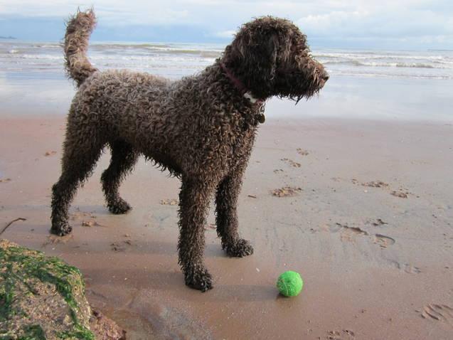 Sara Davies Dog Training In Dartmouth