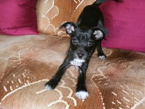 Rita on my sofa, just 15 weeks old