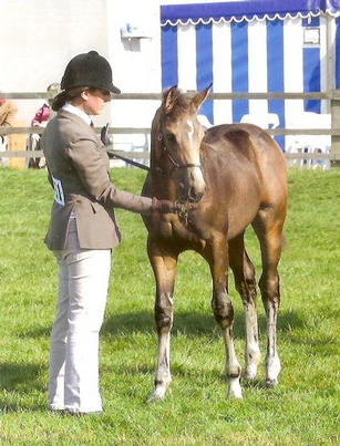 2011 filly by Electrum winning Hunter Foal, Reserve Championship and Best Filly Youngstock