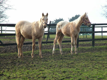 Just after he arrived in England. With Aurumba (aka Crinkle) they are both by RFF The Alchemist