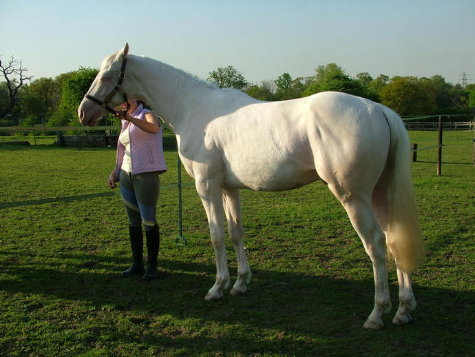 Electrum 22nd April 2009 just before his 2nd Birthday