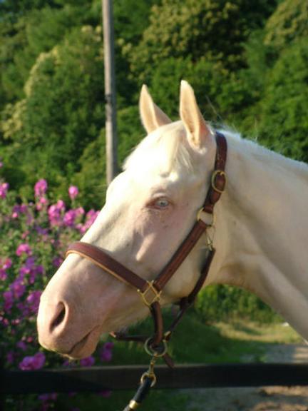 Casper June 2009
