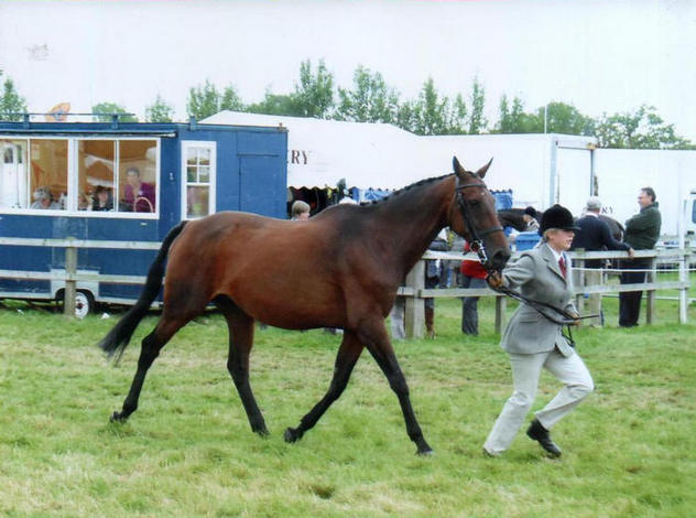 Cassie 4th Hunter broodmare Edenbridge and Oxted Show 2008