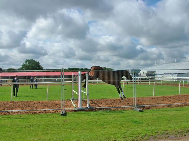 Primitive Passion 4th 2yo Performance horse loose jumping East of England Show 2007