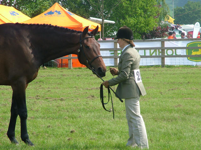 Truly Sport Horse Reserve Champion Herts County 2008