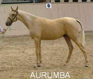Aurumba, 1st Premium Futurity
