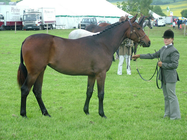 Primtive Passion 1st Herts County in Sporthorse Yearling Class 2006