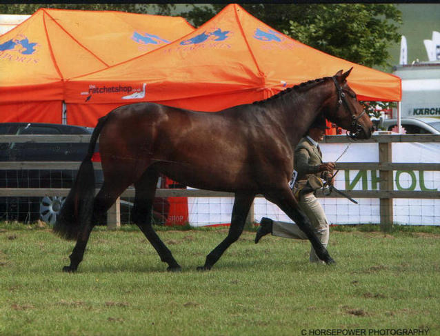 Primitive Passion 1st 3yo Sport Horse and Reserve Champion Herts County Show 2008