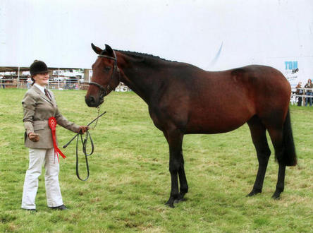 Truly 1st Thoroughbred Horse at Edenbridge and Oxted Show 2008