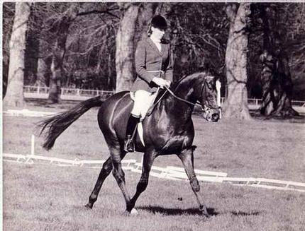 Xenocles ridden by Jenny Loriston Clarke
