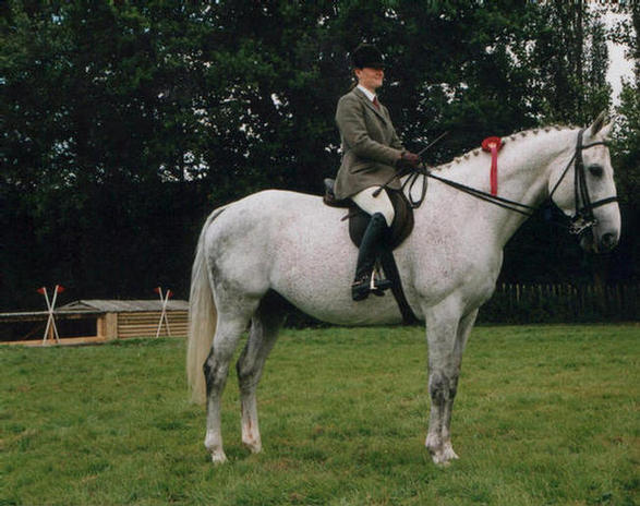 Scallys Missile our other TB stallion