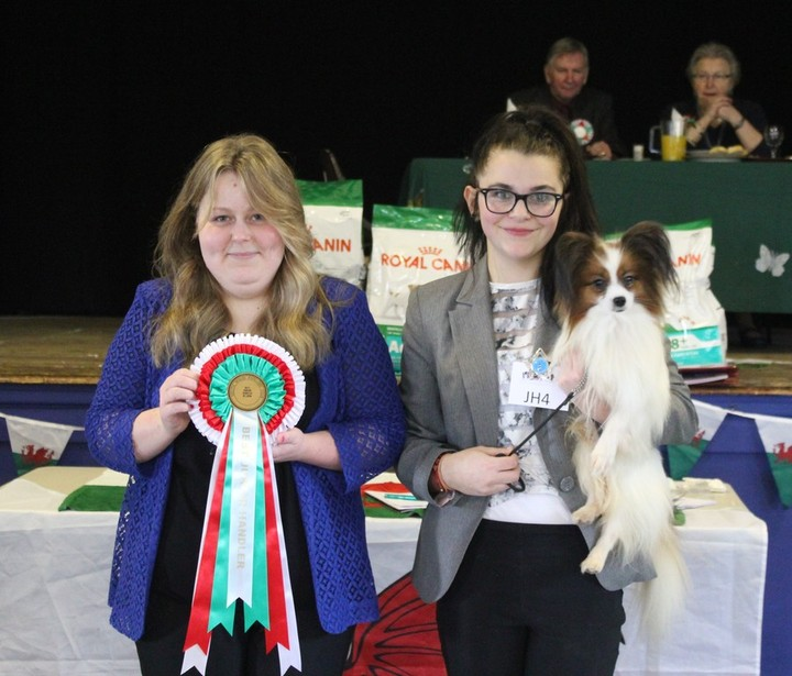 Best Junior Handler In Show