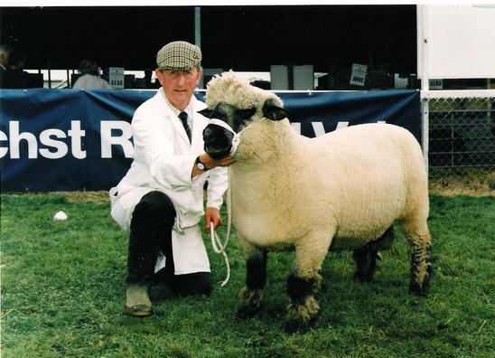 Gorse Dion.   Breed champion Royal Welsh Show