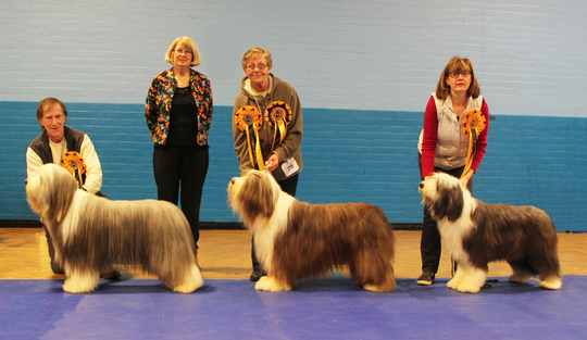 Midshires Bearded Collie Club 2016 best in show