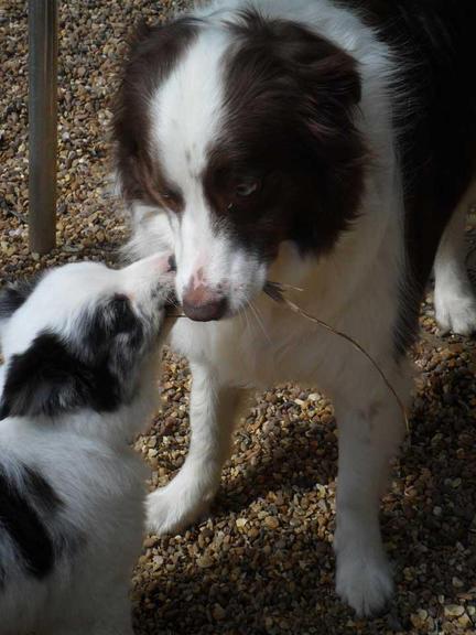 Beau and new friend Monty