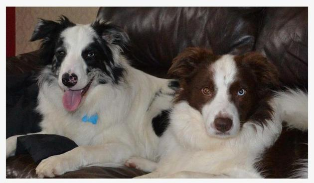Beau & Monty