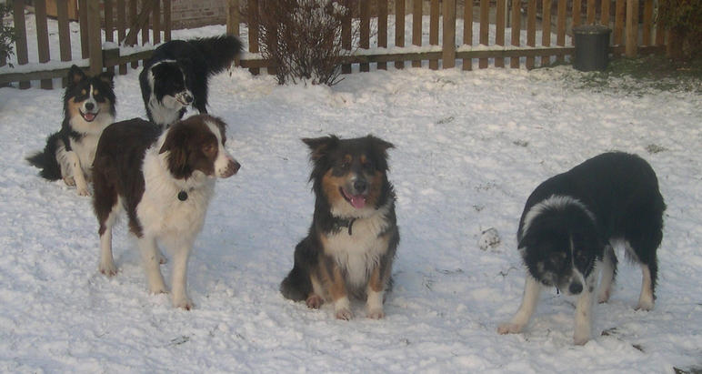 snowtime! christmas 2010