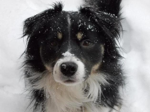 Logan enjoying the snow Jan 2013