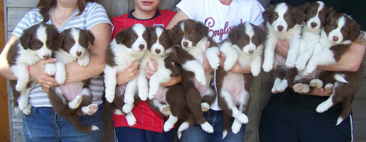 Pups at six weeks