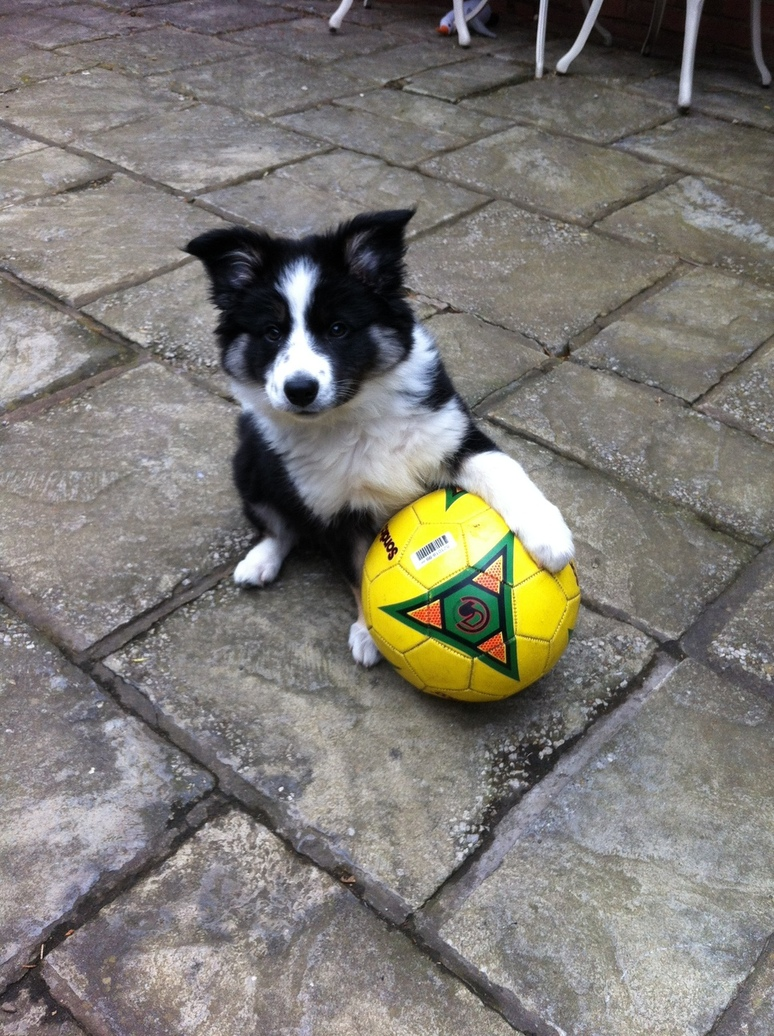 Madge at 11 weeks, training for the England Olympic team