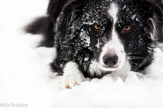 Meg in the snow
