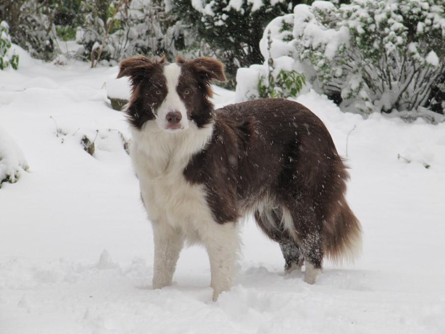 Reuben posing in the snow