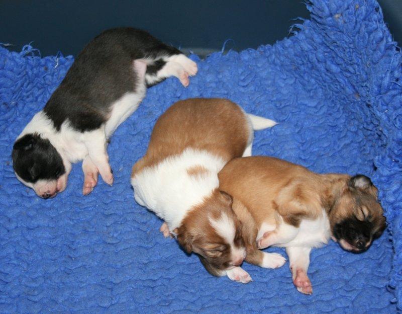 Reuben pups 1