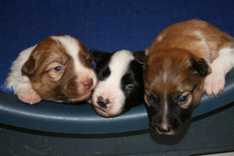 Reuben pups 2