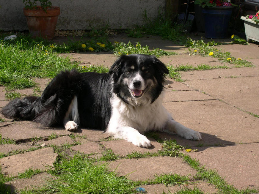 Sadie in the sunshine - May 09