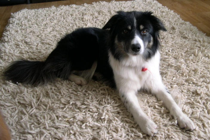 Sadie on her favourite rug