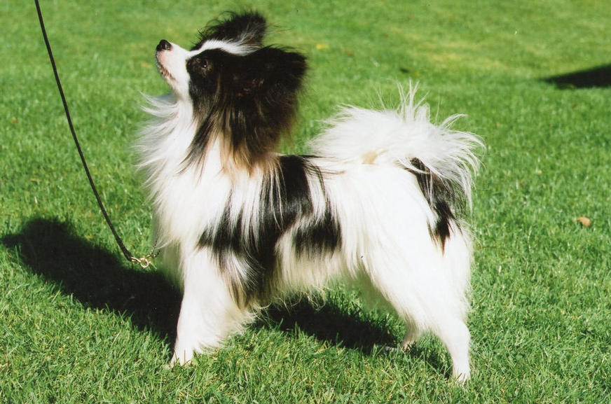 Nigel as a puppy