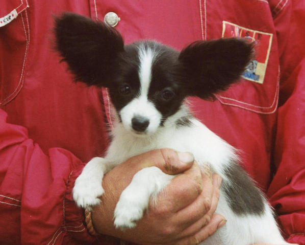 Jewel as a puppy