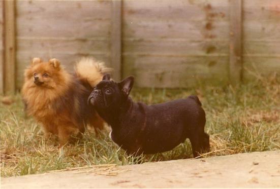 Pip & Simon