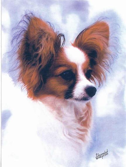 Robbie as a puppy